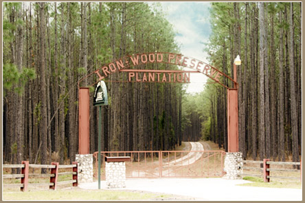 IronWood Preserve | Private Quail & Deer Hunting on 5,000 acres North Florida's Suwannee Country