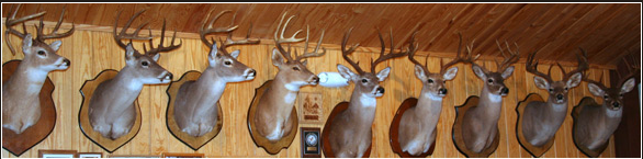 Iron-Wood Deer Hunting | 200+ Class Trophy White Tail Deer with no reservation on Size*